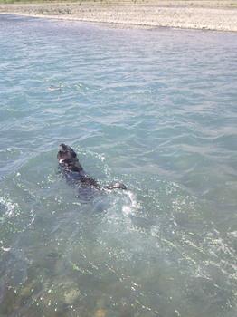 泳いでるよ